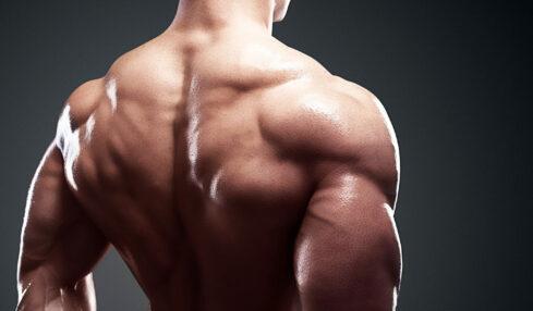 exercices pour se muscler le dos